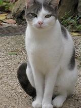 ジヴリの猫