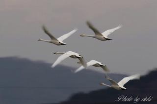 0202白鳥さん15