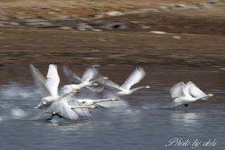 0202白鳥さん08