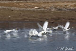 0202白鳥さん06
