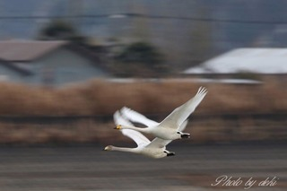 0202白鳥さん18