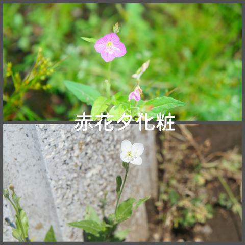 PhotoGrid_1526264582564