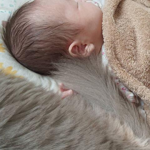 Somali__cats_baby