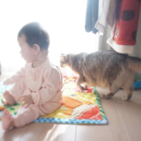 子ども_赤ちゃんとねこ_2017011901