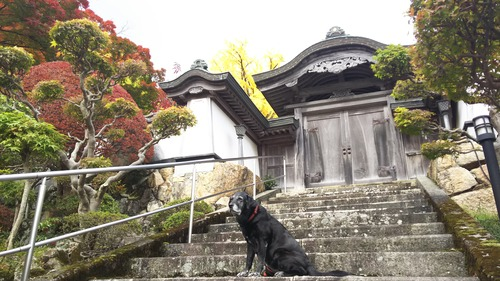 11月11日大窪寺 (13)