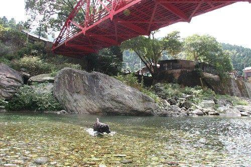 りん 川 9