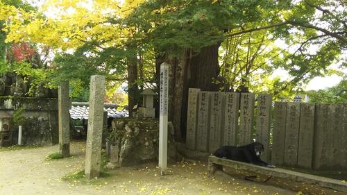 11月11日大窪寺 (1)
