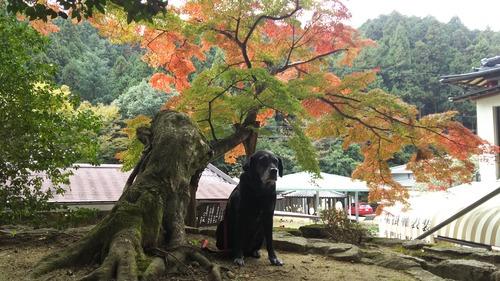 11月11日大窪寺 (18)