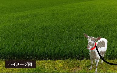 畑にたたずむヤギ(完成版)