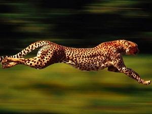 fastest-animal-580x435