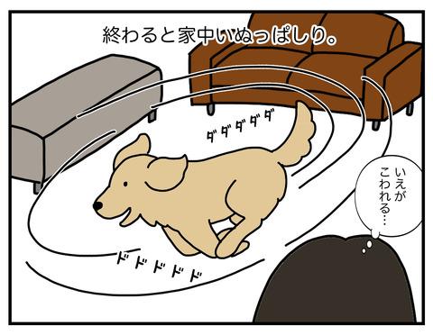 老犬シャンプー02