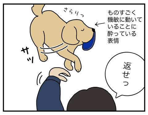 得意げな犬07