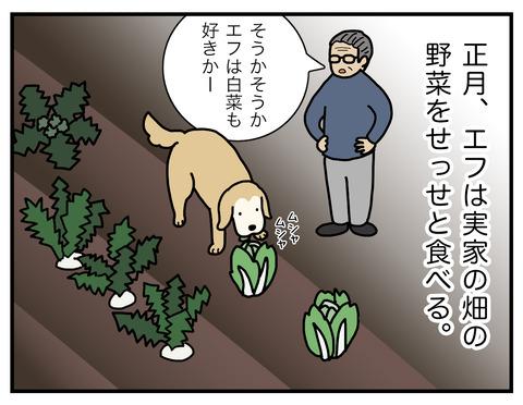 白菜の食べ方01