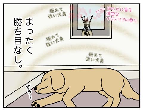 玄関犬臭05