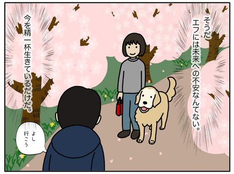 桜と老犬05