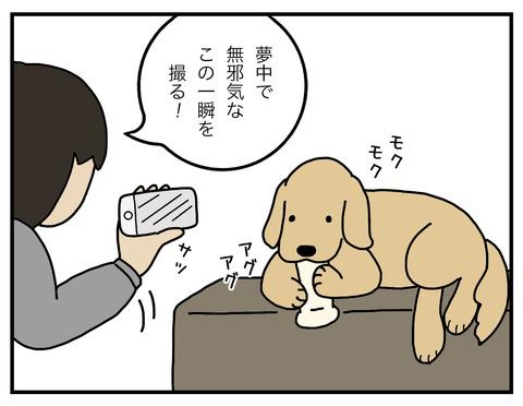真面目犬01