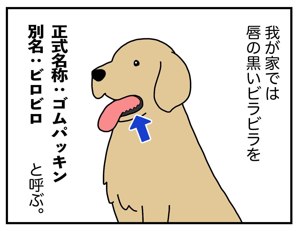 ゴム に の いる が は ついて パッキン 口 犬