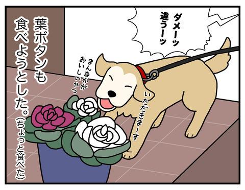 白菜の食べ方05