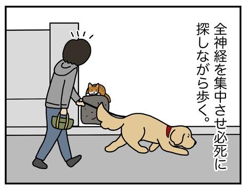 野生の本能04