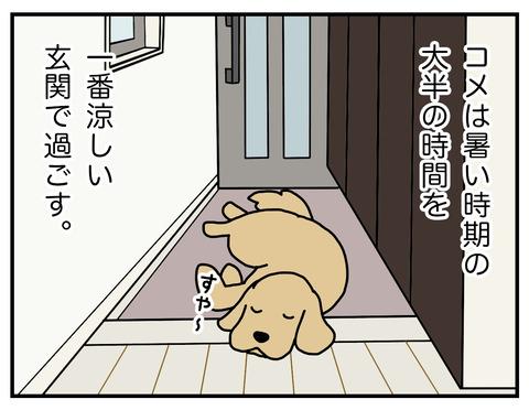 玄関犬臭01
