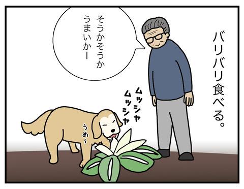 白菜の食べ方03