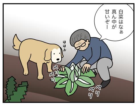 白菜の食べ方02