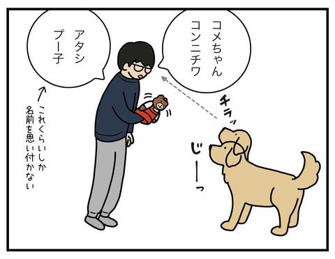 冷静な犬05