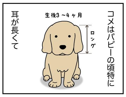 耳の長い犬01