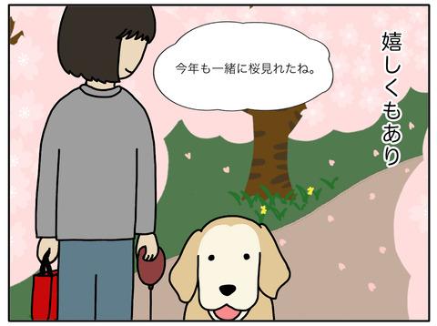 桜と老犬02
