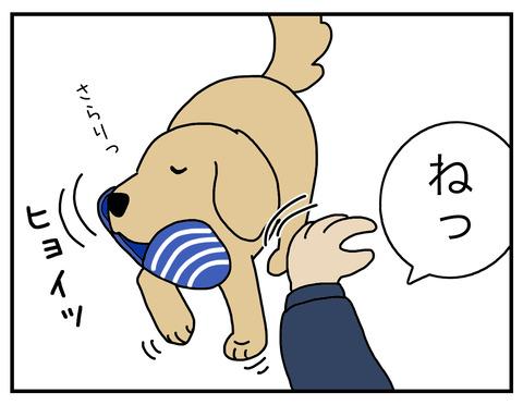 得意げな犬04