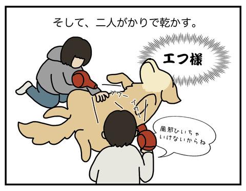 老犬シャンプー06