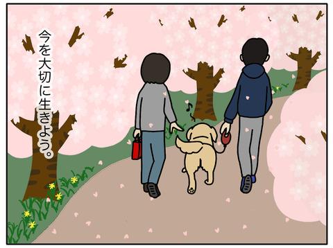 桜と老犬06