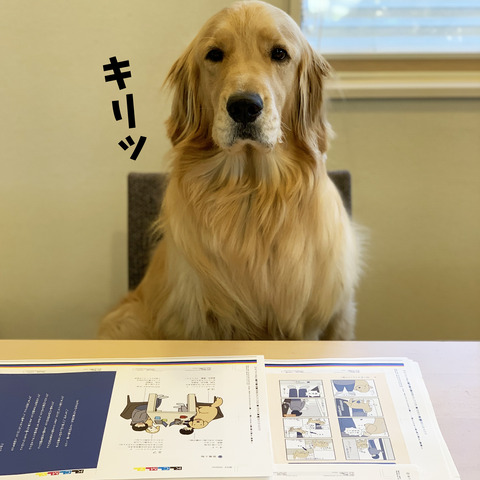 blog宣伝03