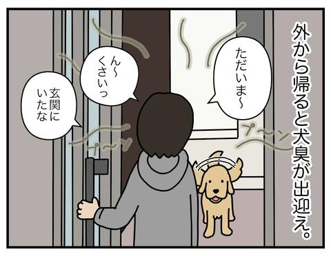 玄関犬臭03
