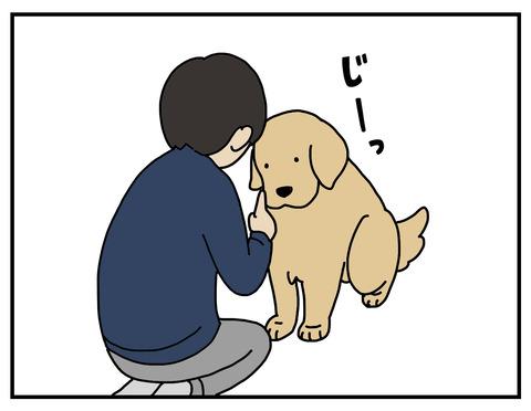 算数犬03