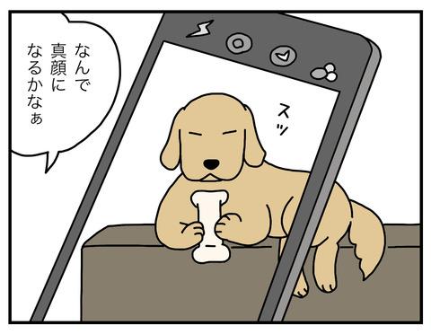 真面目犬02