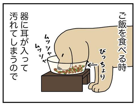 耳の長い犬02