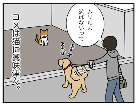 野生の本能01