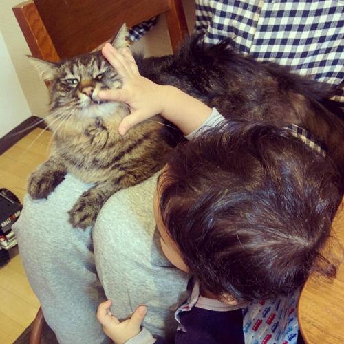 ネコの日4