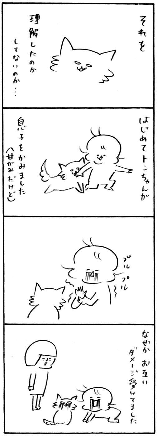 トンちゃん怒る2