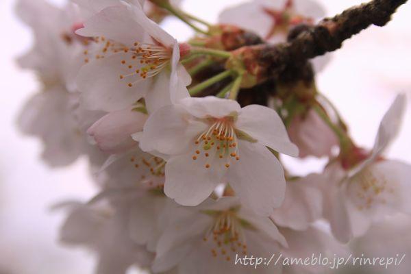 勇気凛りん料理とお菓子のレシピ rinrepi☆-桜