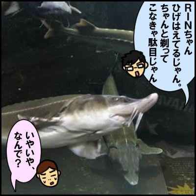 suizoku3