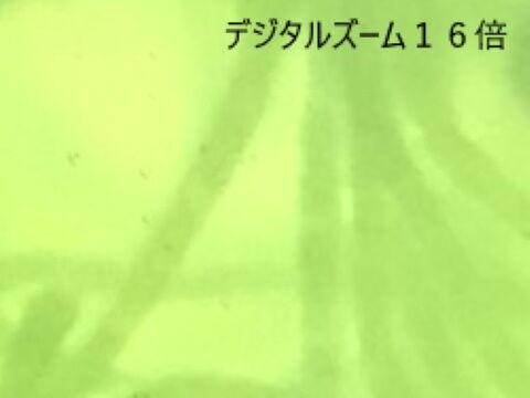 010^^^^^
