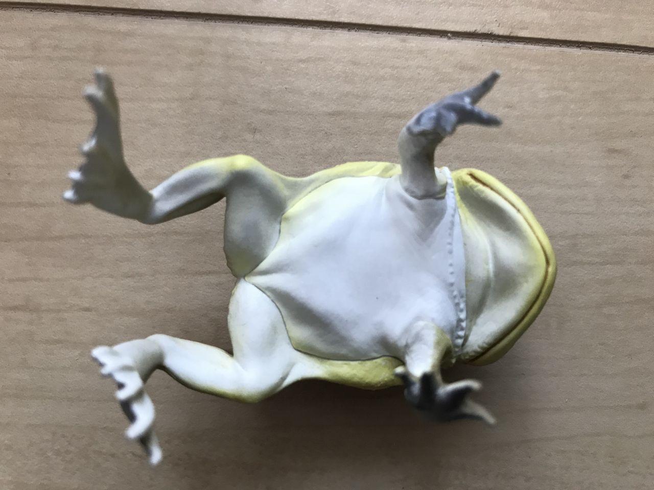 ガエル マルメ タピオカ