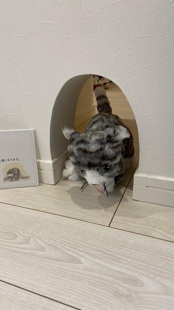 猫と住む家