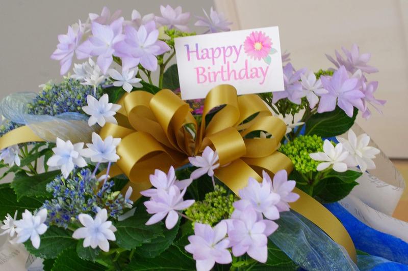 夫からもらった紫陽花