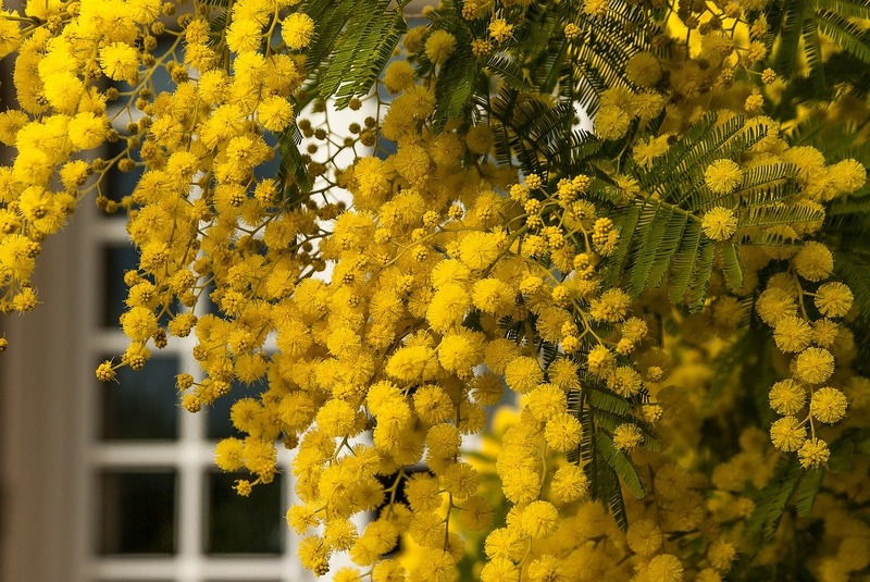 flower-3123130_1280