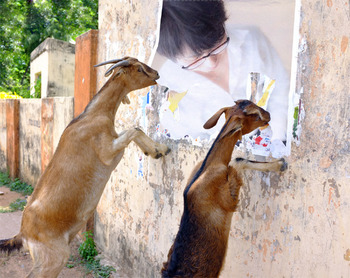 PhotoFunia Goats Regular 2018-10-05 05 19 42