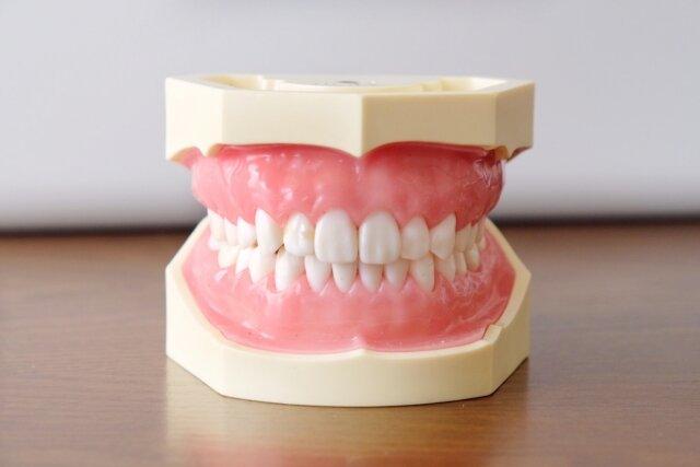 歯と口の週間