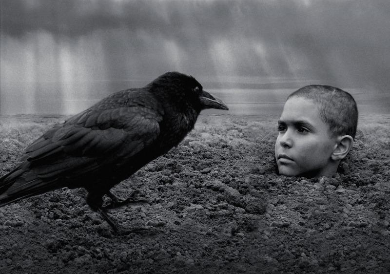 異端の鳥_メイン